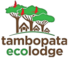 Tambopata Ecolodge - Tour in Rainforest Peru