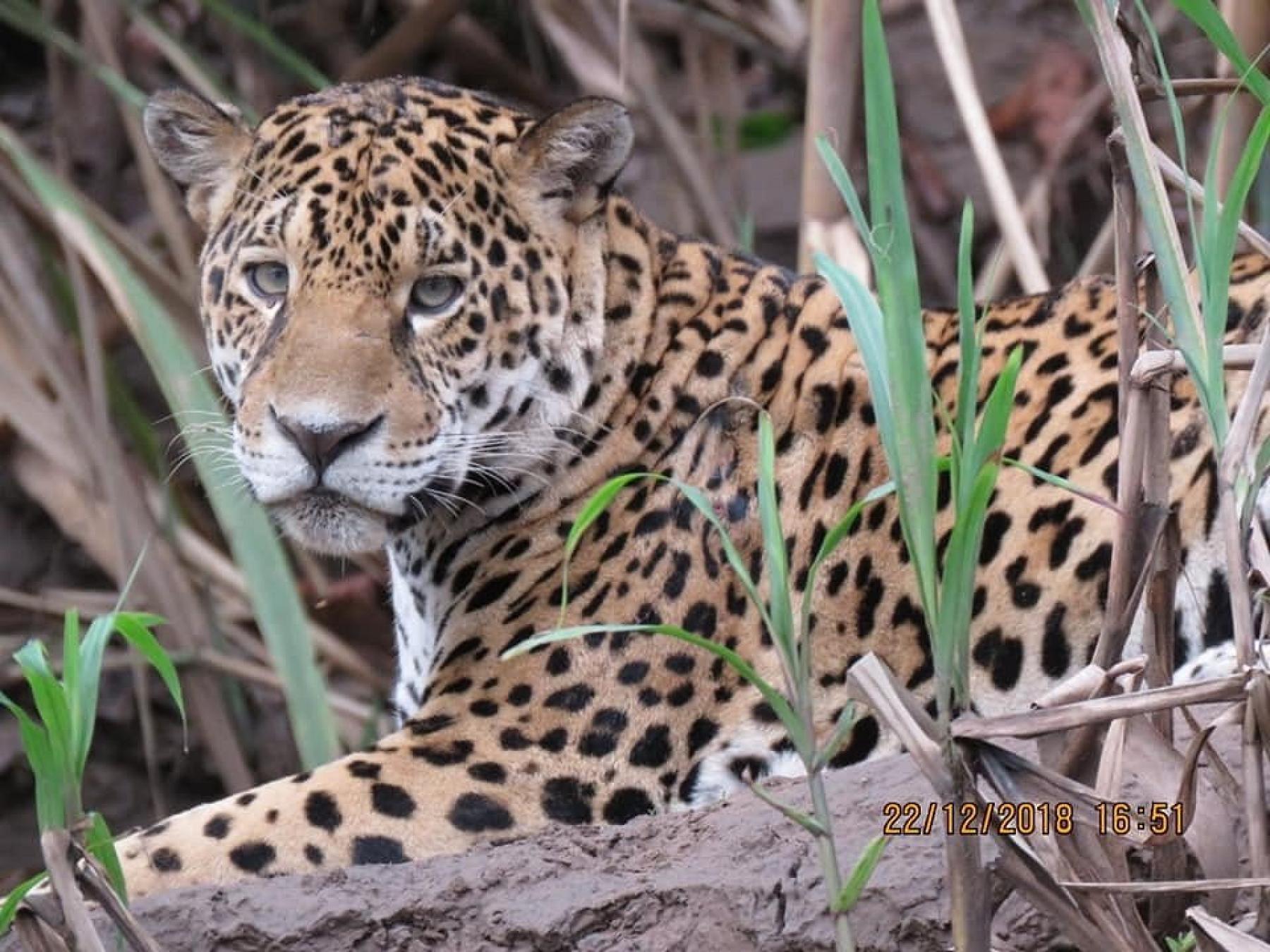 Amazon Jungle Tours In Peru