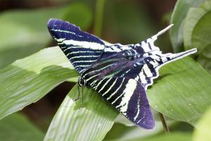 Peru: Home to 20% of the world's known butterfly species