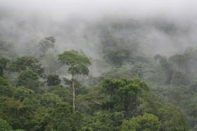 Temperatures can fall in the tropical forests of South America